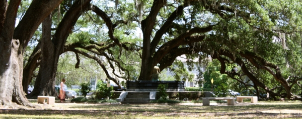 The 5,000th tree since Hurricane Katrina was planted in New Orleans City Park on Dec. 5th, 2012.