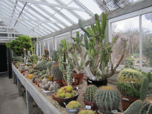Cactus and Succulents greenhouse