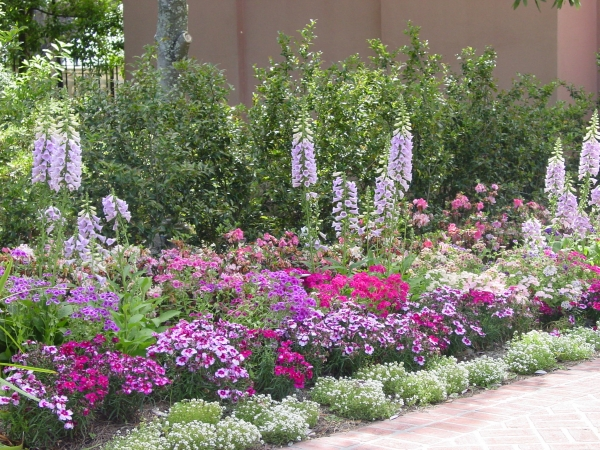 Dianthus, Foxglove, and Alyssum