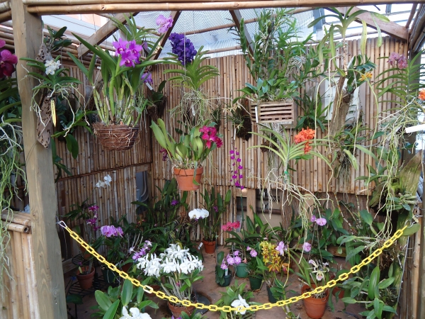 Conservatory Tropical Rain Forest Orchid Display