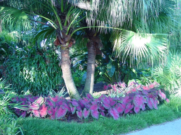 The Palm Garden in July