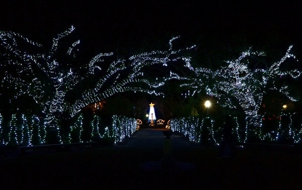 20 acres of the Park that twinkle during the holidays