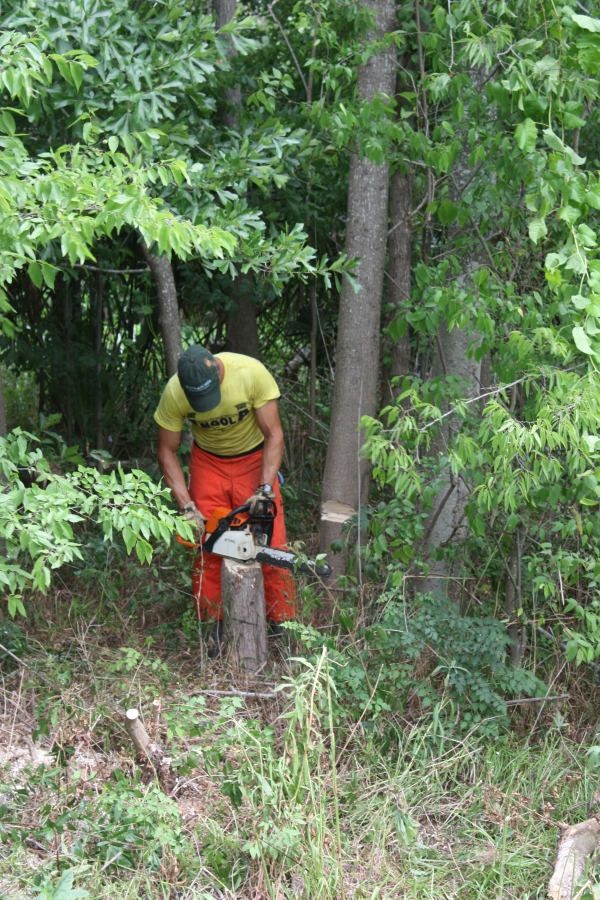 Park officials are currently working to remove invasive plant species such as Chinese Tallow and Giant Ragweed from the Park, particularly within Couturie Forest.